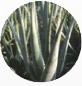 アロエベラ葉エキス(保湿成分)